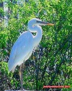 Kayak South Florida, Eco Tour Fla, Eco tour usa