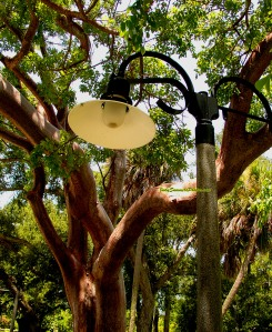 gumbo limbo tree, fort lauderdale beach, spanish architecture, art deco,